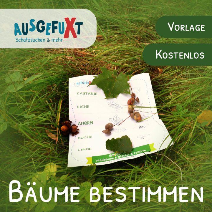 Bäume bestimmen: Vorlage für Waldspaziergänge