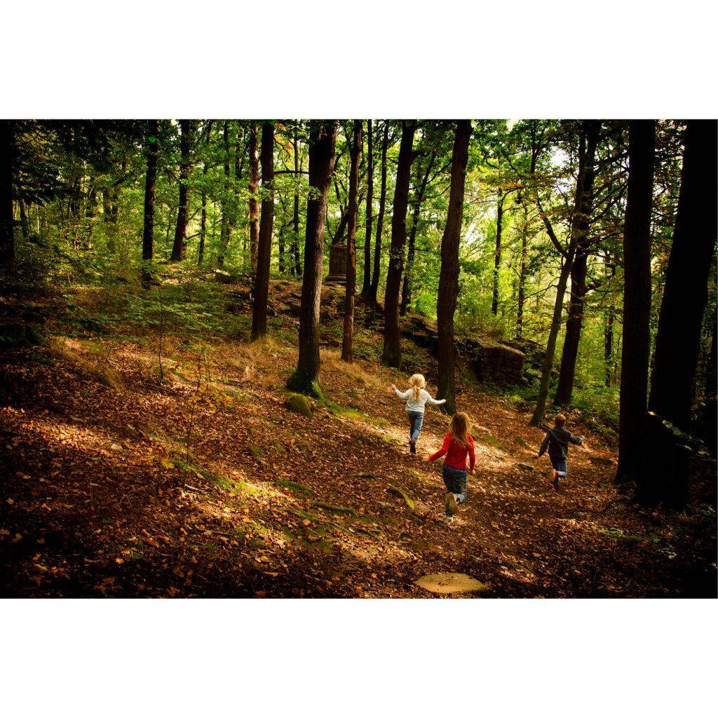 Kinder spielen die Wald-Schatzsuche