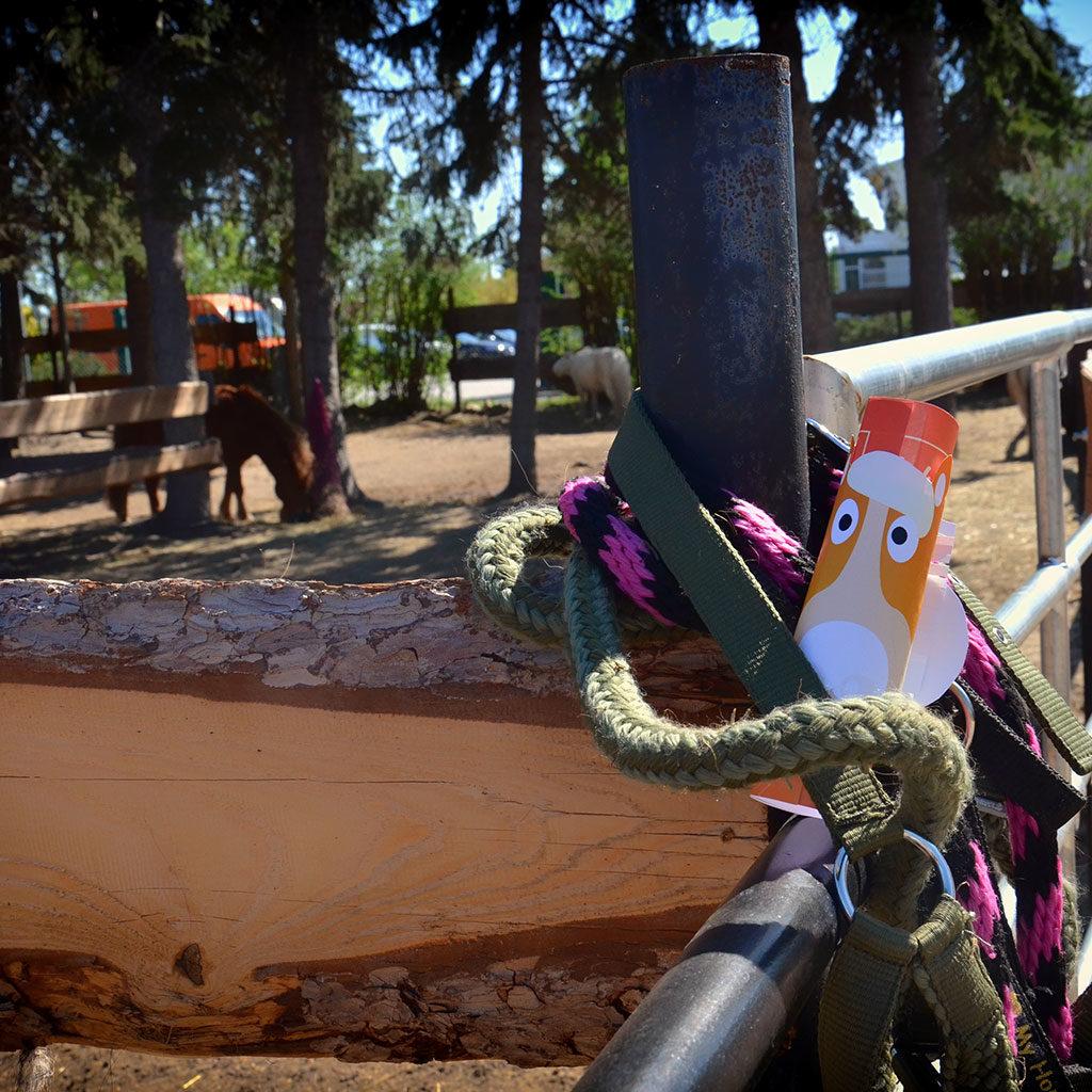 Pferde-Schatzsuche für jeden Ort